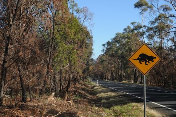 Tasmanie (3)