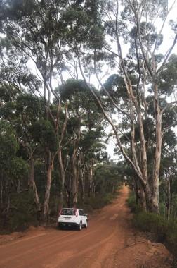 Kangaroo Island (26)