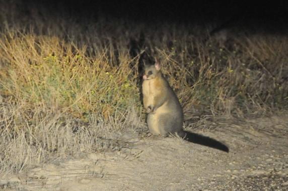 Kangaroo Island (28)