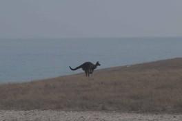 Kangaroo Island (29)