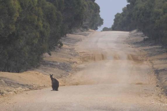 Kangaroo Island (34)