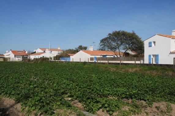 Noirmoutier (17)