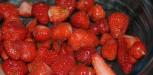 recette du Sorbet fraises thermomix
