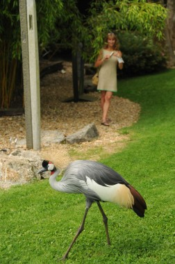 La Mare Aux Oiseaux (10)