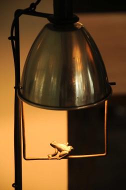 La Mare Aux Oiseaux (54)