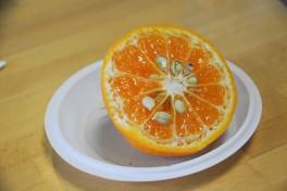 Agrumes Bachès, Ferrandi (38) mandarines