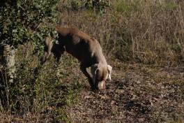 Truffière (11)
