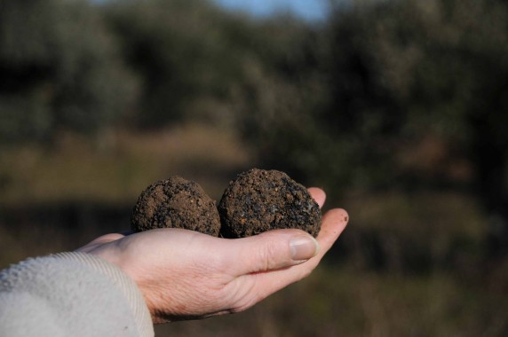 Truffière (12)