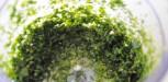 Crumble d herbes