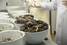 Caviar Sturia (9)