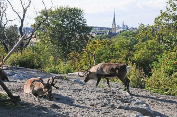 Stockholm (57)