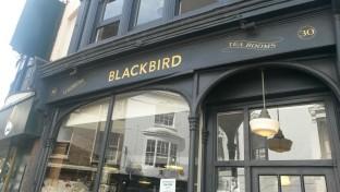 Blackbird Brighton