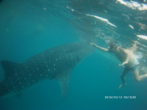 requin baleine Oslob