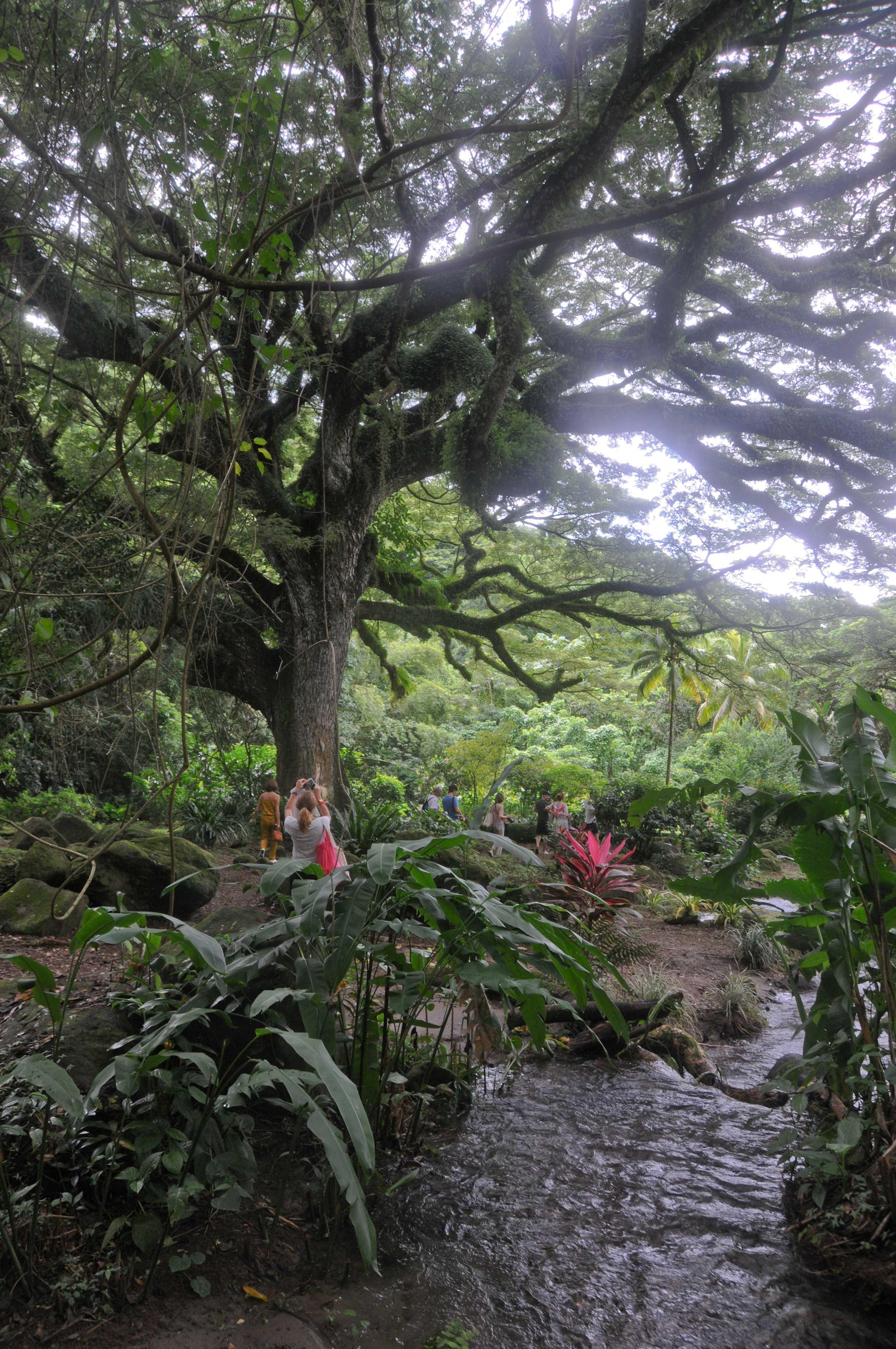 Habitation Céron Martinique (19)