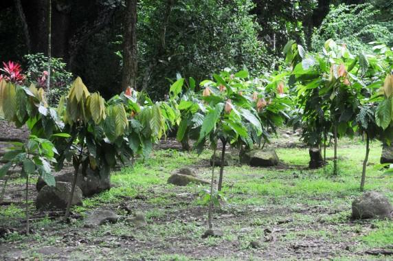Habitation Céron Martinique (20)