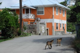 Iles Grenadines (10)