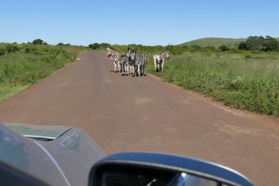 Afrique du Sud (38)