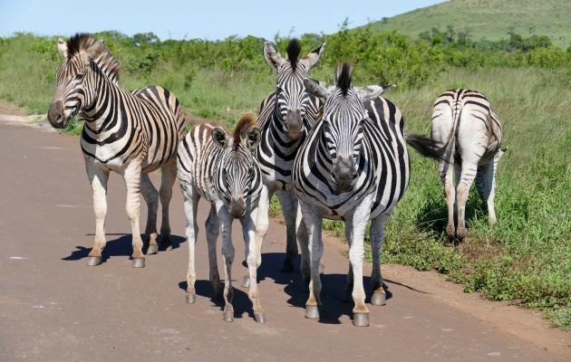 Site rencontre afrique du sud