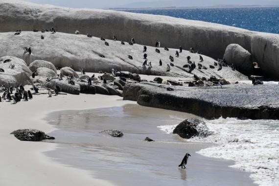 Le Cap, Capetown (14)