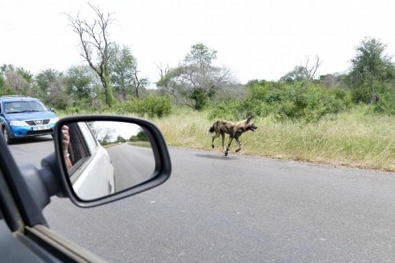 Afrique du Sud (75)