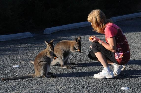 Tasmanie (30)