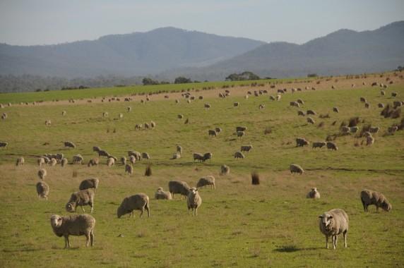 Tasmanie (4)
