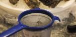 recette sorbet huitres
