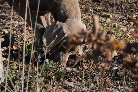 Truffière (15)