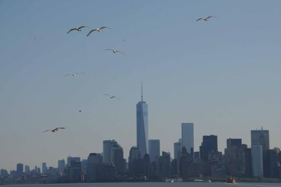 New York (89)