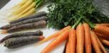 carottes de couleur