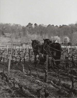 Les Sources de Caudalie, un art de vivre au coeur des vignes (13)