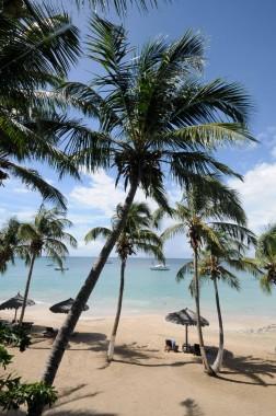 Iles Grenadines (11)