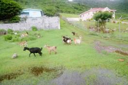 Iles Grenadines (19)