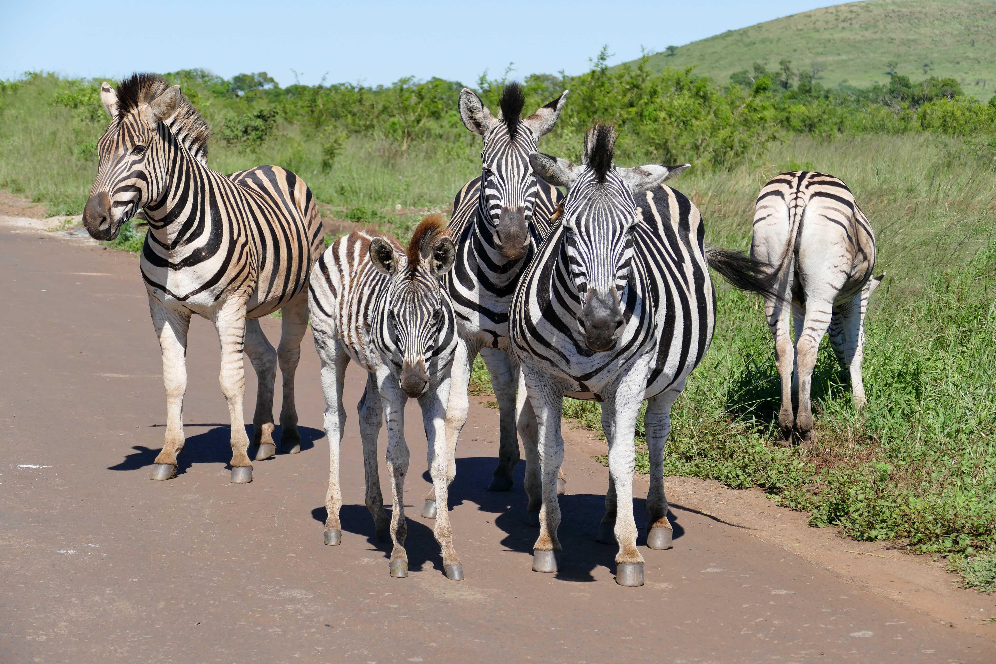 A la rencontre des animaux sauvages en Afrique du Sud