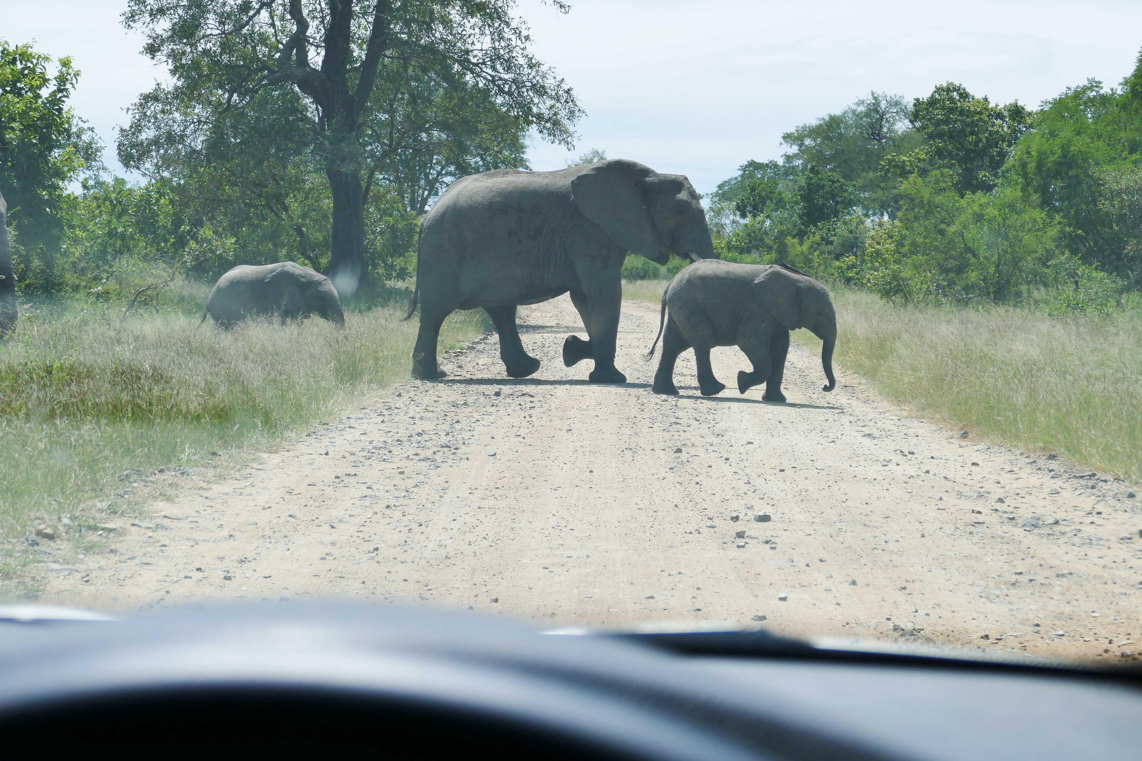 Voyage dans le Swaziland et au Parc Kruger en Afrique du Sud