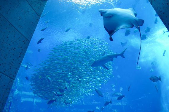 aquarium Dubaï