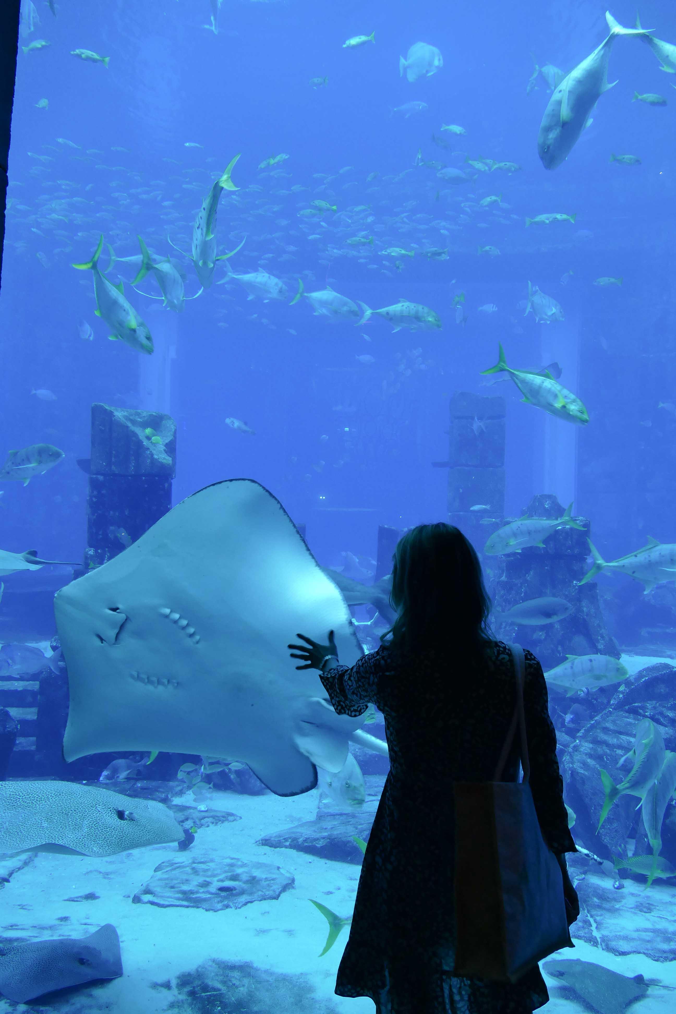 L'aquarium de l 'Atlantis Dubaï
