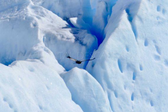 condor glacier