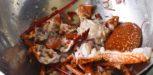 Soupe de homard
