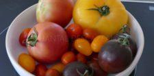 Tomates couleur