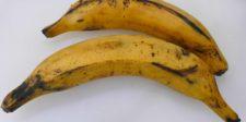 Bananes plantains