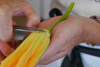 Retirer les sépales fleur de courgette